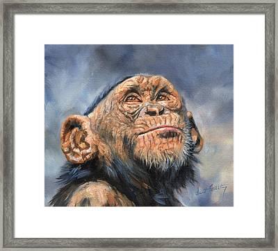 Chimp Framed Print by David Stribbling