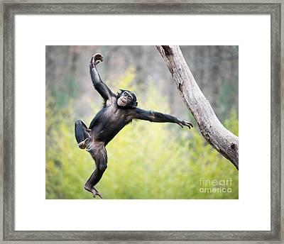 Chimp In Flight Framed Print by Abeselom Zerit