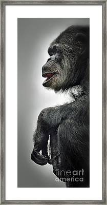 Chimpanzee Profile Vignetee Effect Framed Print by Jim Fitzpatrick