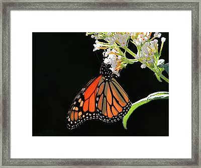 Chin Ups Framed Print by Donna Kennedy