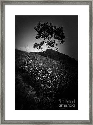China #2419 Framed Print