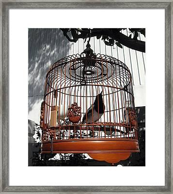 China Bird In Mahogany Cage Framed Print by Lisa Boyd