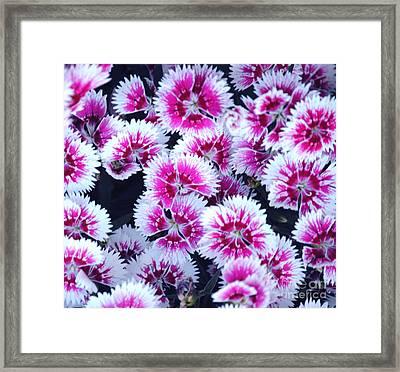 China Pink Framed Print by DiDi Higginbotham