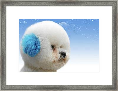 China's Latest Craze - Dyeing Pets Framed Print by Christine Till