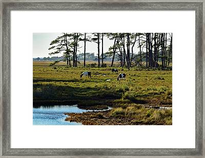 Chincoteague Ponies Framed Print