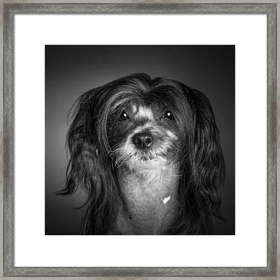 Framed Print featuring the photograph Chinese Crested - 02 by Larry Carr