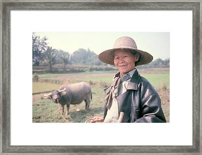 Framed Print featuring the photograph Chinese Farm Woman Oxen by Douglas Pike
