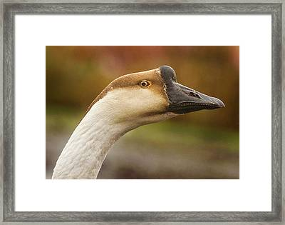 Chinese Goose Framed Print by Jean Noren