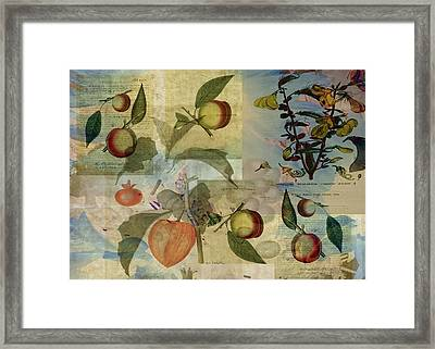 Chinese Lantern Surrounded Framed Print by Sarah Vernon