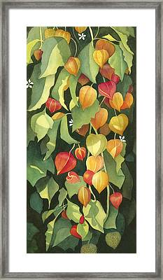 Chinese Lanterns Framed Print by Anne Havard