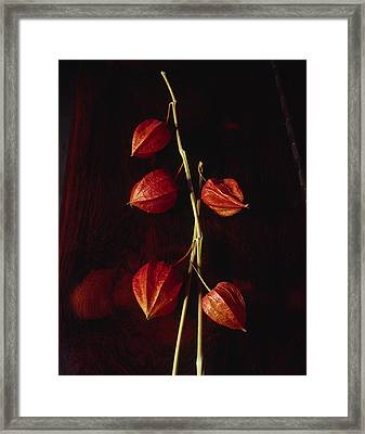 Chinese Lanterns Framed Print by Art Ferrier
