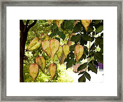 Chinese Lanterns Framed Print