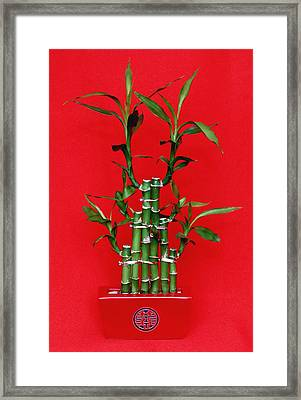 Chinese Luck Bamboo Framed Print