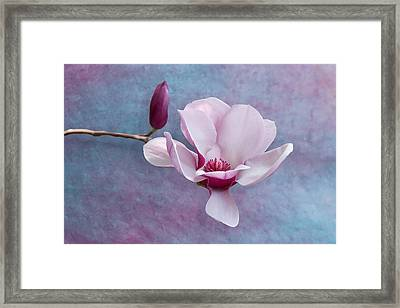 Chinese Magnolia Flower With Bud Framed Print