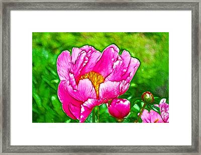 Chinese Peony Flower Framed Print by Lanjee Chee