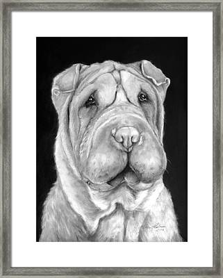 Chinese Sharpei Framed Print