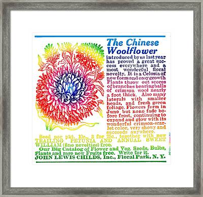 Chinese Woolflower Framed Print by Eric Edelman