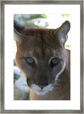 Framed Print featuring the photograph Chinook by Laddie Halupa