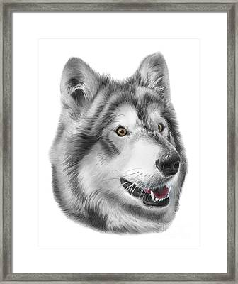 Chinook Framed Print by Peter Piatt