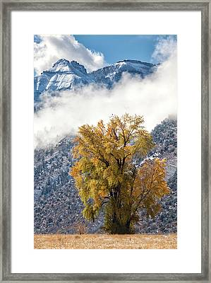 Chipeta And Cottonwood Framed Print
