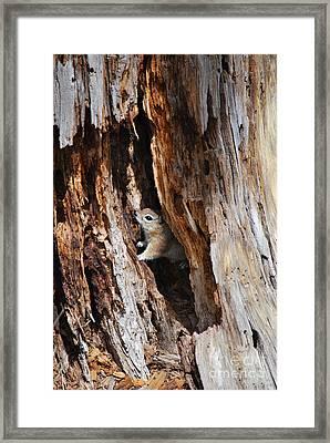 Chipmunk - Eager Arizona Framed Print by Donna Greene