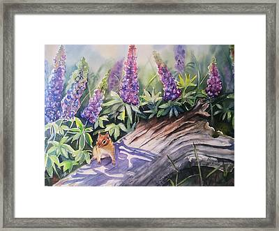 Chipmunk On Log With Lupine Framed Print by Patricia Pushaw