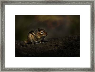 Framed Print featuring the photograph Chipmunk On Rock by Michael Cummings