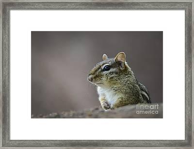 Chipmunk Profile Framed Print