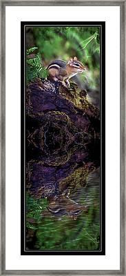Chipmunk Reflections Framed Print by Bonnie Marquette