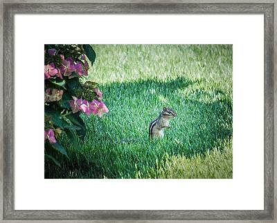 Chipmunk - Stop To Smell The Flowers  Framed Print by Black Brook Photography