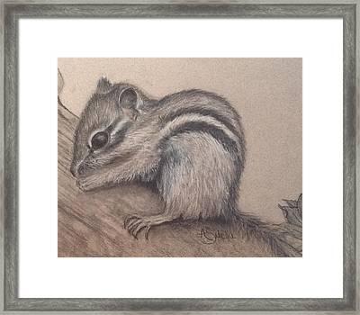 Chipmunk, Tn Wildlife Series Framed Print