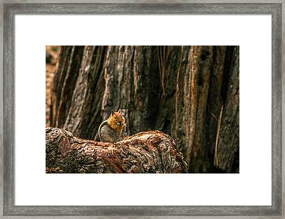 Chipper Framed Print