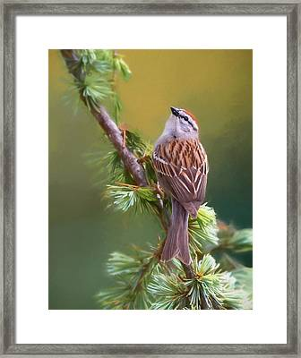 Chipper Looking Up Framed Print