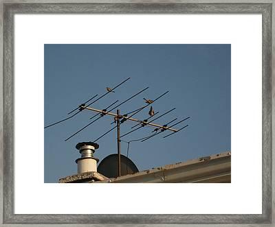 Chirping Antenna Framed Print by Stephen Davis