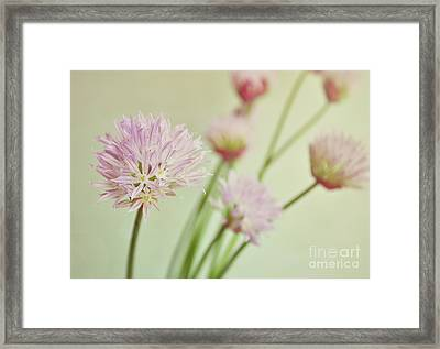 Chives In Flower Framed Print