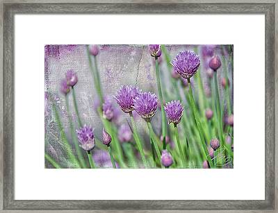 Chives In Texture Framed Print