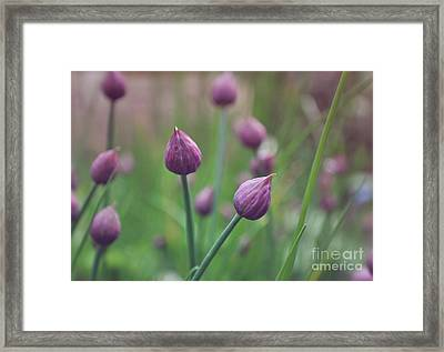 Chives Framed Print by Lyn Randle