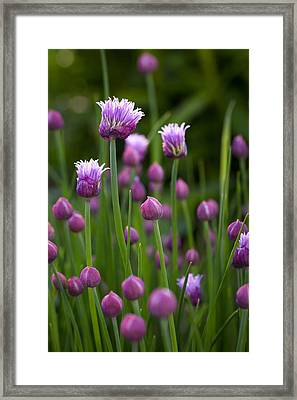Chives Framed Print by Patrick Downey