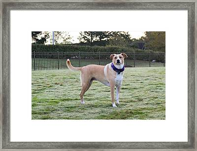Chloe At The Dog Park Framed Print