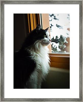 Chloe In Winter Window Framed Print