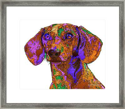 Chloe. Pet Series Framed Print