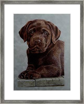 Chocolate Baby Framed Print