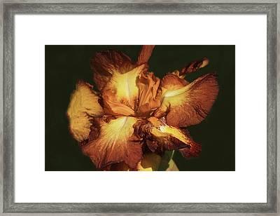 Chocolate Banana Framed Print