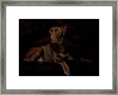 Chocolate Lab Dog Framed Print by Christine Till