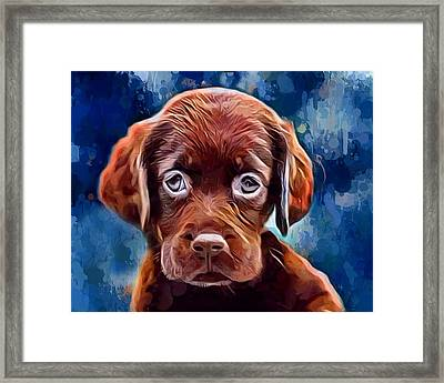 Chocolate Lab Pup Framed Print by Scott Wallace