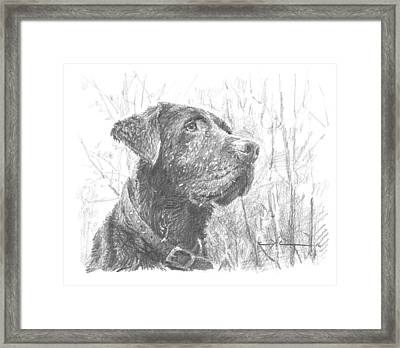 Chocolate Labrador In Woods Drawing Framed Print by Mike Theuer