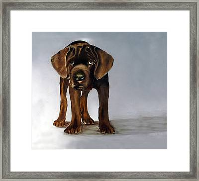 Chocolate Labrador Puppy Framed Print by Dick Larsen