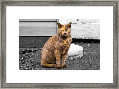 Chocolate Meets Peanut Butter Framed Print by Ashley Germain