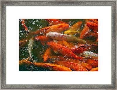 Choi Framed Print