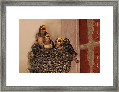 Choir Practice Framed Print by Mark Alder